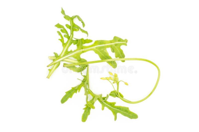 Rucola cruda fresca Rucola isolato su bianco fotografie stock