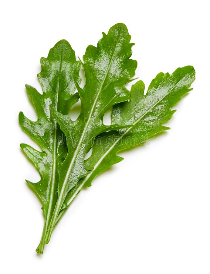 Rucola leaves isolated on white. Arugula or rucola leaves over white Clipping Path stock image