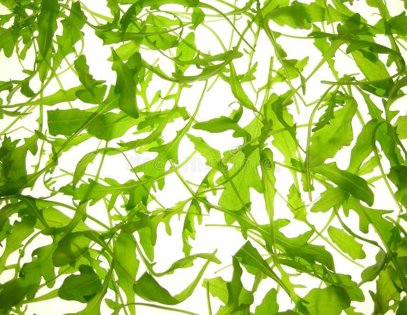 Download Rucola salad stock image. Image of lettuce, nature, dinner - 4019959