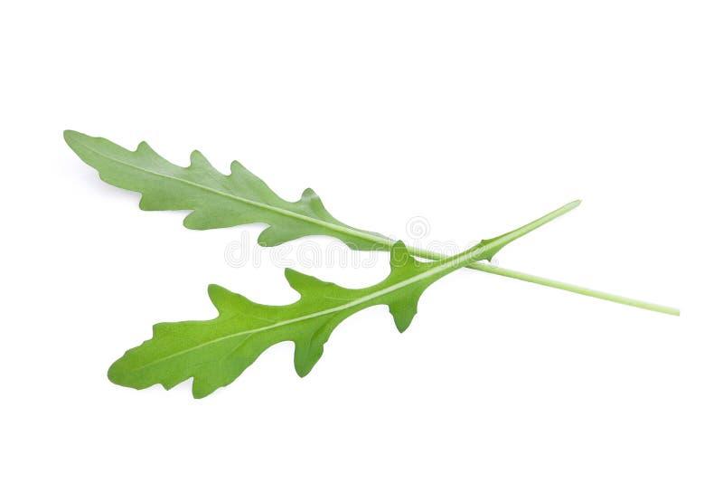 Rucola selvatica delle foglie verdi del razzo isolata su bianco fotografia stock libera da diritti