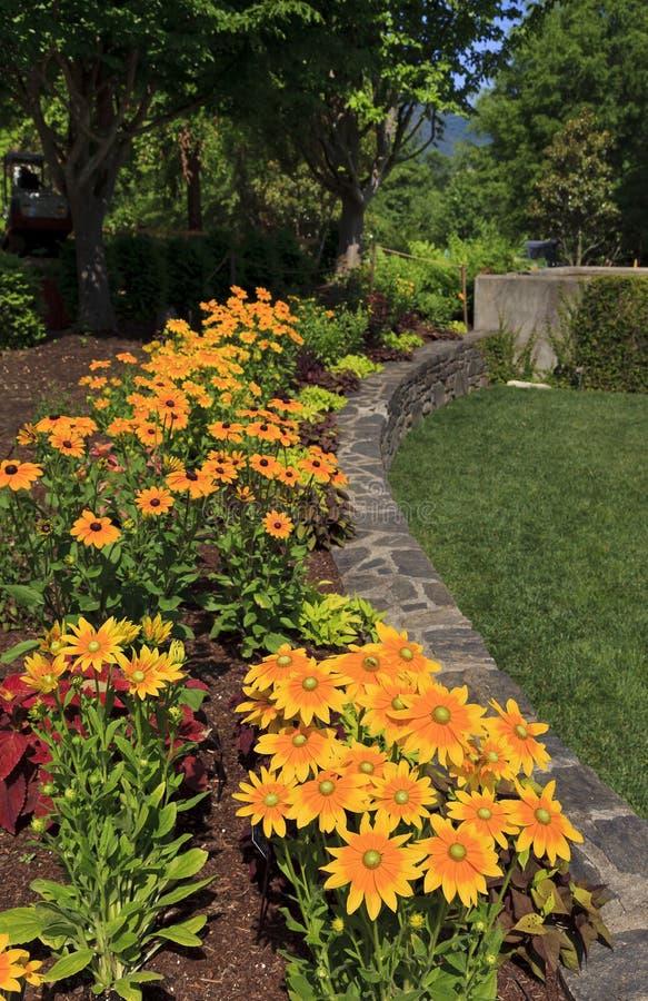 Rudbeckia στον κήπο στοκ φωτογραφία με δικαίωμα ελεύθερης χρήσης
