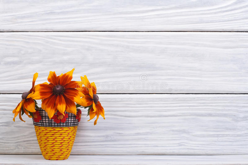 Rudbeckia beautiful flowers in a yellow vase stock image