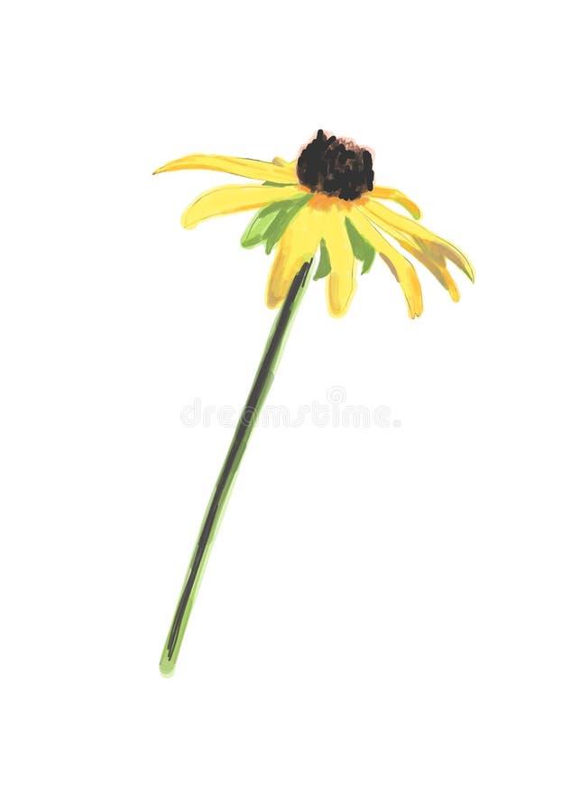 Rudbeckia Flower Drawing. Vector stock illustration