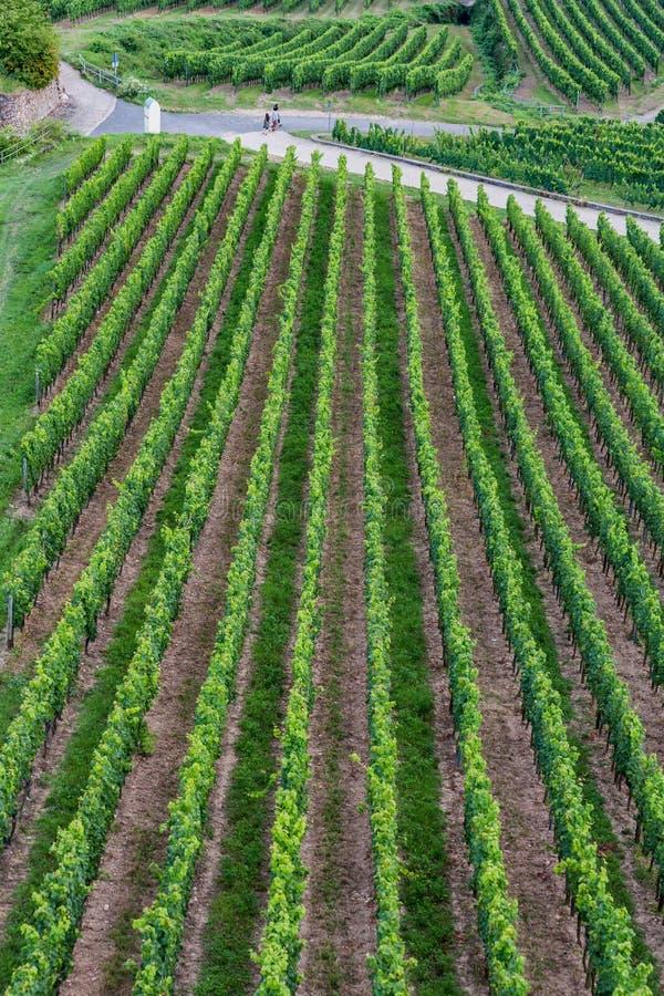 Rudesheim,德国葡萄树空中射击  免版税库存照片