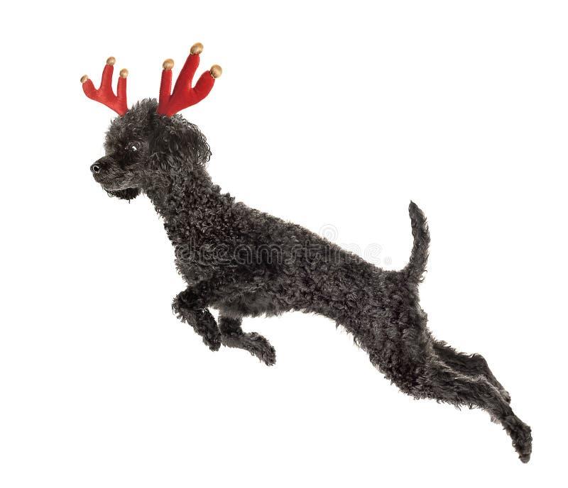 Rudolf fotografia stock