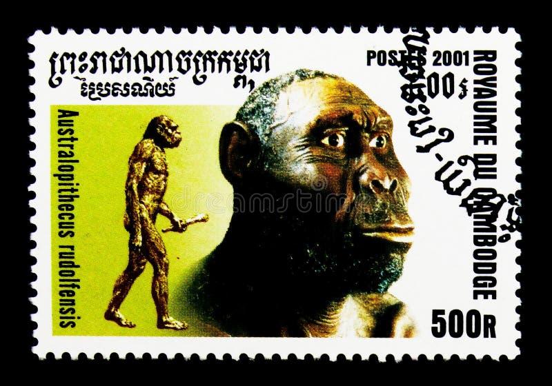 Rudolfensis dell'australopiteco, evoluzione del serie dell'umanità, circa 2001 fotografia stock