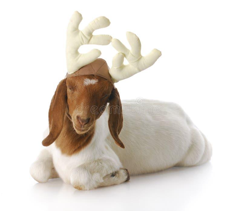 Rudolph foto de stock royalty free