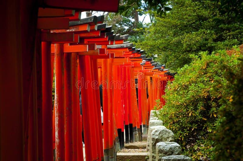 Rudopomarańczowe torus bramy przy sintoizm świątynią, Japonia fotografia stock