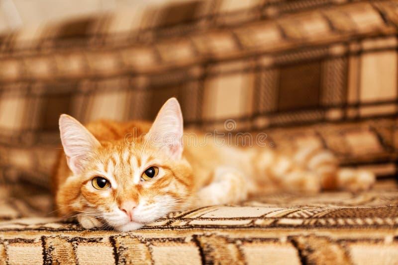Rudzielec domowy kot kłama na kanapie fotografia stock