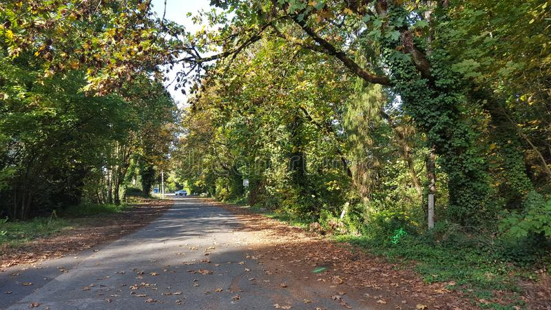 Rue bordée d'arbres près de Salmon Creek photo stock