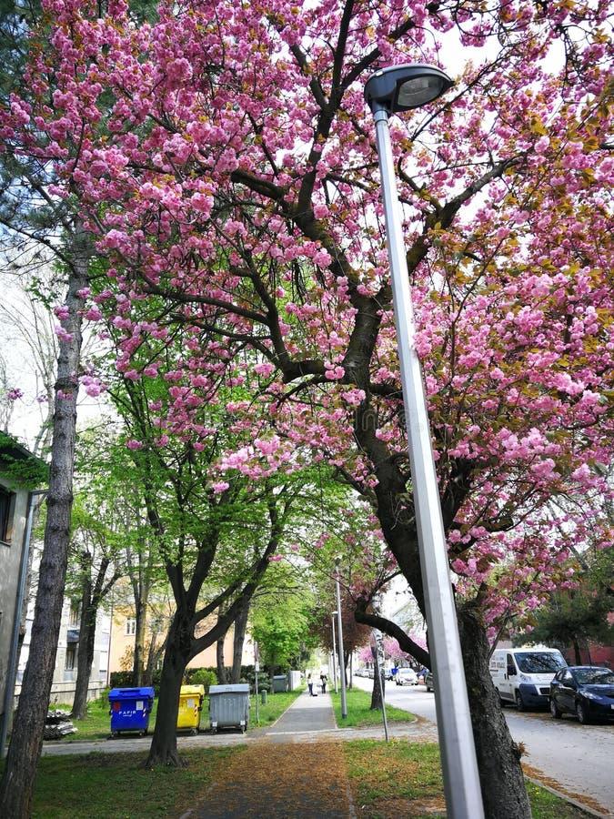 Rue de fleur photos stock