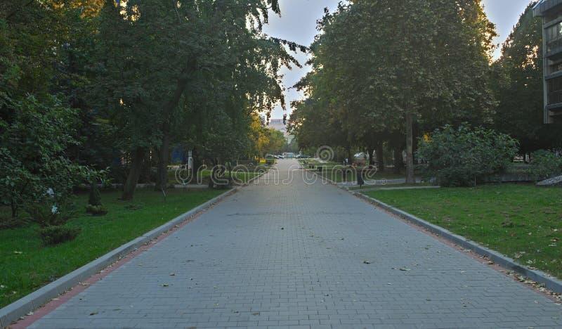 Rue de marche vide avec des arbres des deux côtés photos libres de droits