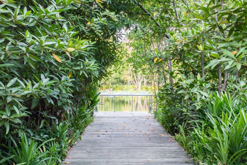 Rue de rivière de forêt image libre de droits