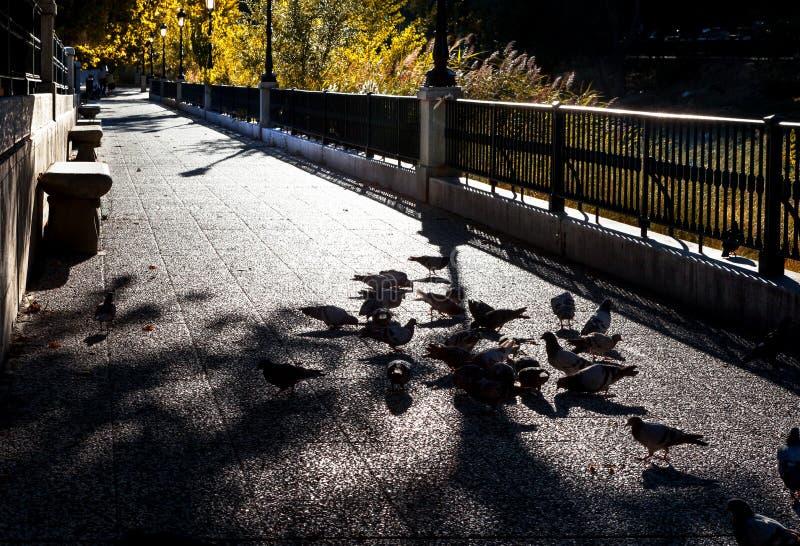 rue et colombes de ville image stock