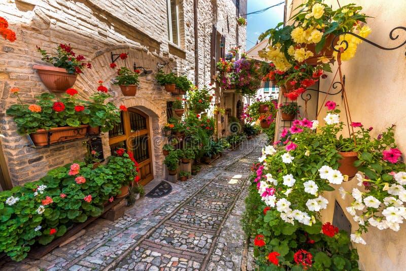 Rue florale en Italie centrale, dans le petit Umbrian médiéval à image libre de droits