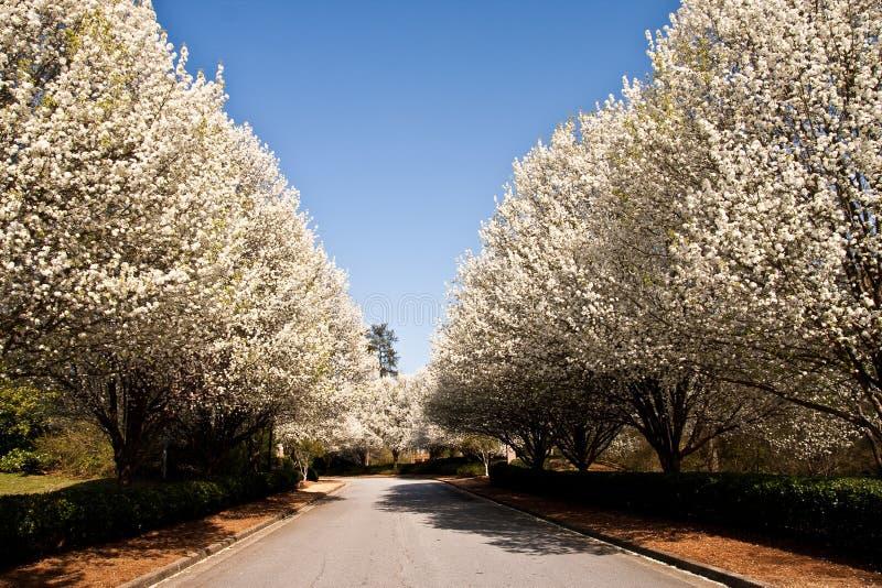 Rue rayée par arbre images stock