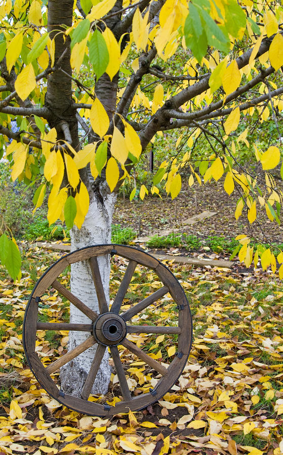 Rueda de madera del carro en las hojas del amarillo del otoño imagen de archivo libre de regalías