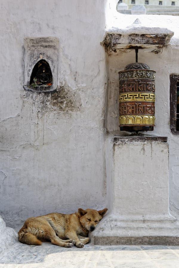 Rueda y perro de rezo que duermen en el stupa de Bothnath en Katmandu fotografía de archivo libre de regalías