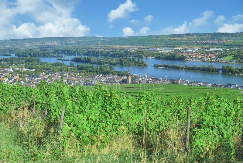 Ruedesheim AM Ρήνος, Rheingau, Hesse, Γερμανία στοκ εικόνα με δικαίωμα ελεύθερης χρήσης