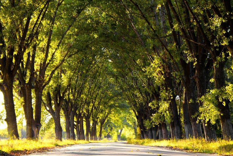 Ruelle avec des arbres en stationnement photo libre de droits