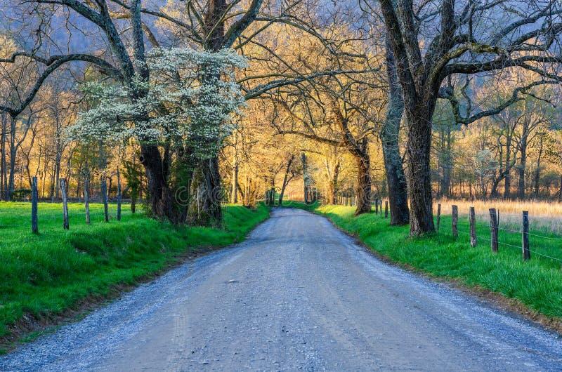 Ruelle d'étincelles, crique de Cades, Great Smoky Mountains images stock