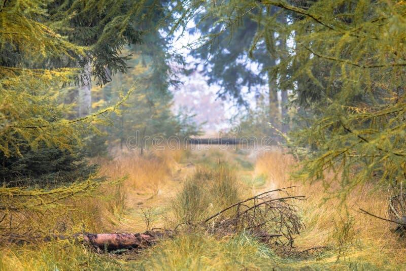 Ruelle d'arbre d'automne avec le mélèze photographie stock