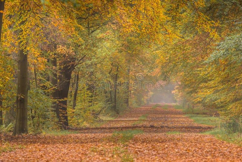 Ruelle d'automne avec les arbres de hêtre jaunes colorés chauds photographie stock