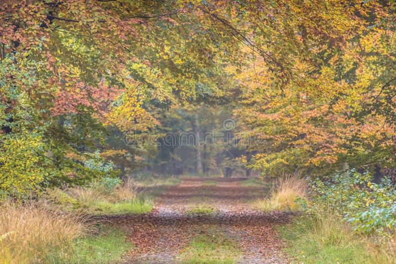 Ruelle d'automne avec les feuilles jaunes de hêtre photographie stock