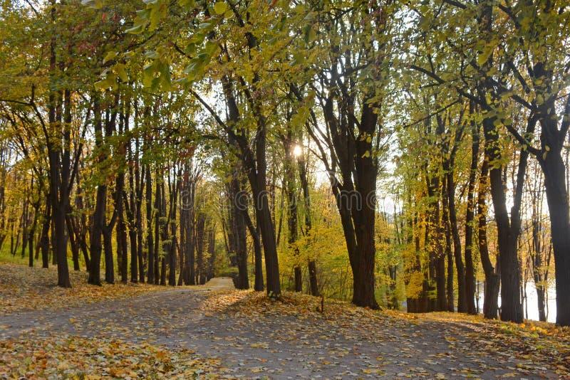 Ruelle d'automne en parc Paysage d'or d'automne à l'arrière-plan de coucher de soleil Tapis des feuilles d'érable images stock