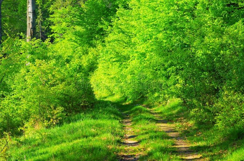 Ruelle dans la forêt photos libres de droits