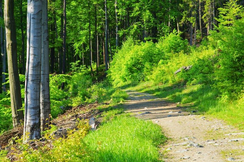 Ruelle dans la forêt photo libre de droits