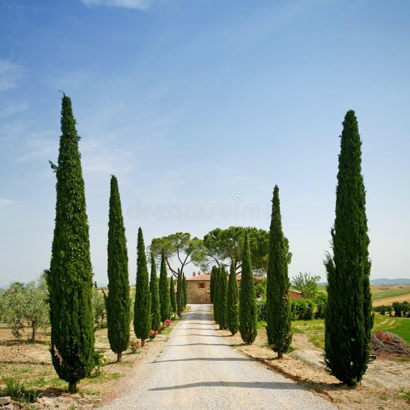 Ruelle de Cypress en Toscane photos libres de droits