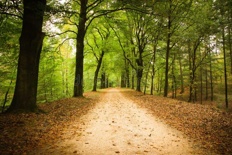 Ruelle de forêt photo libre de droits