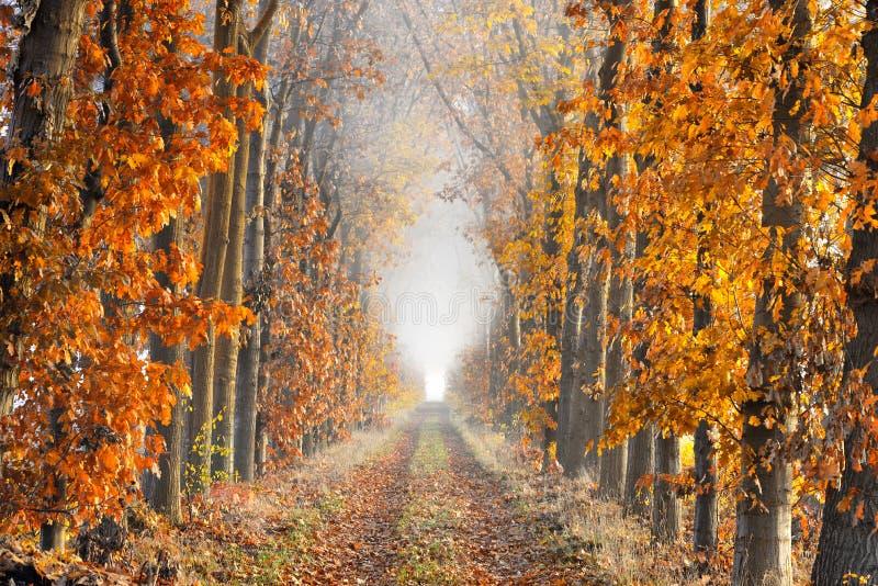 Ruelle de perspective un matin brumeux en automne photos stock