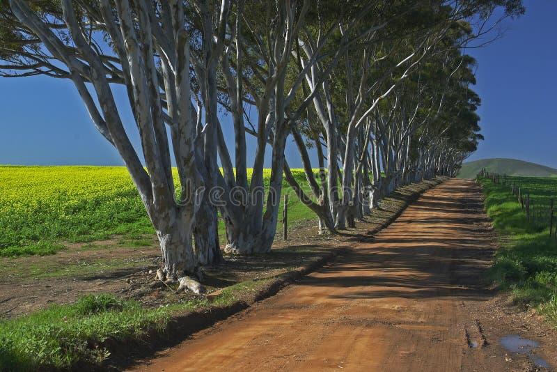 Ruelle des arbres photo libre de droits