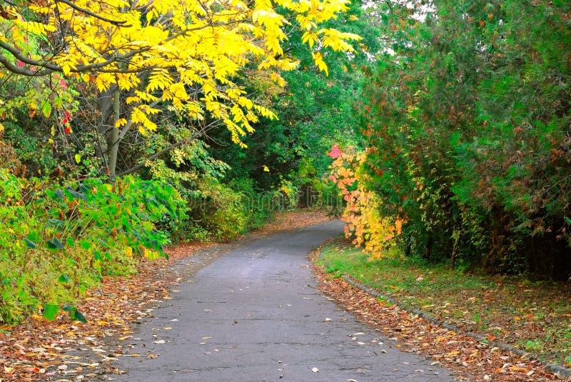 Ruelle en stationnement d'automne images libres de droits