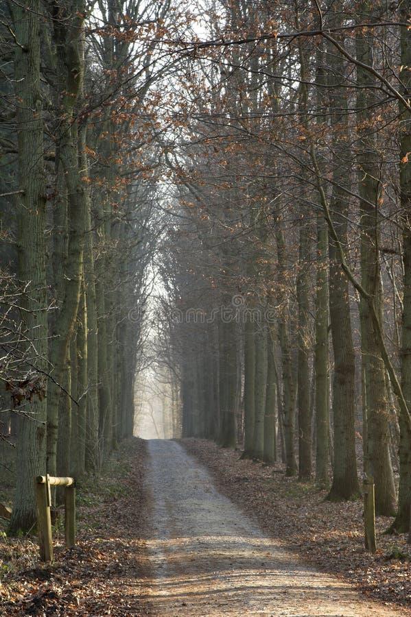 Ruelle ensoleillée de forêt de l'hiver image libre de droits