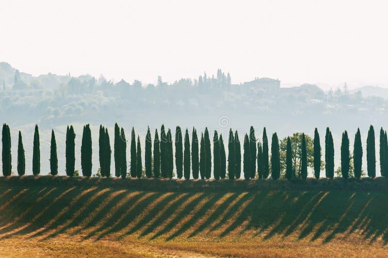 Ruelle magique spectaculaire de la Toscane de cyprès à feuilles persistantes italien images stock