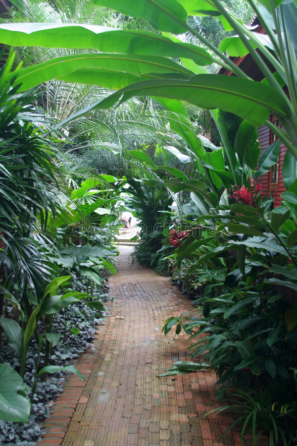 Ruelle tropicale photos stock