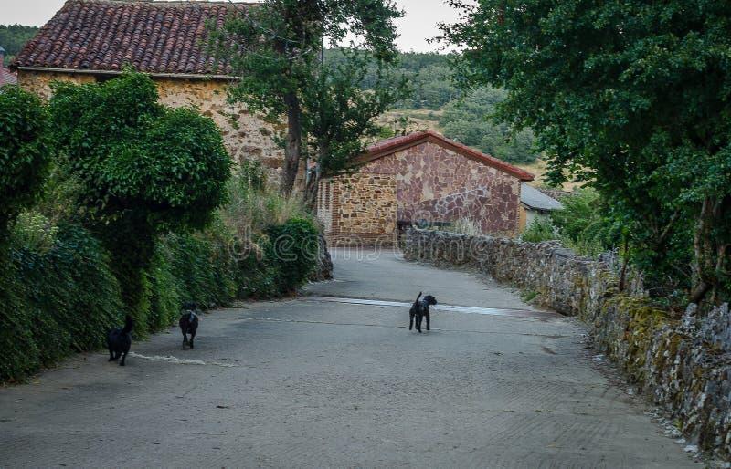 Rues de village de Verdeña de Palencia avec des chiens images libres de droits