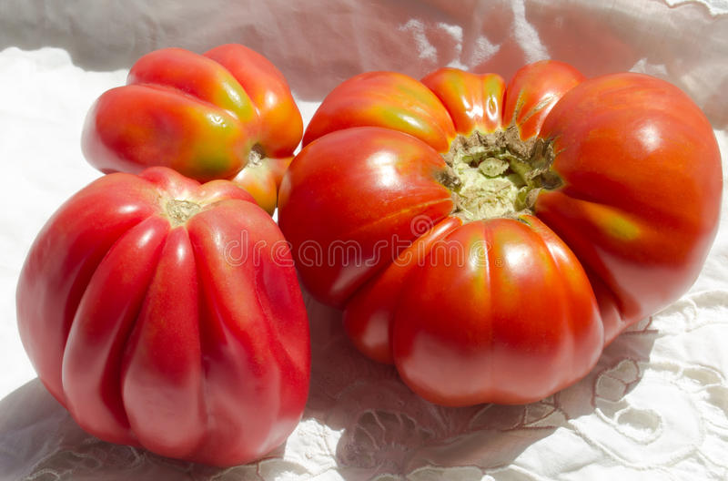 Ruffled heirloom tomatoes. Organic vegetables royalty free stock image