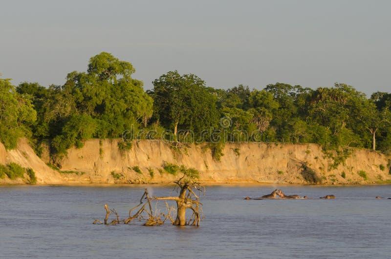 Rufiji河坦桑尼亚 库存图片