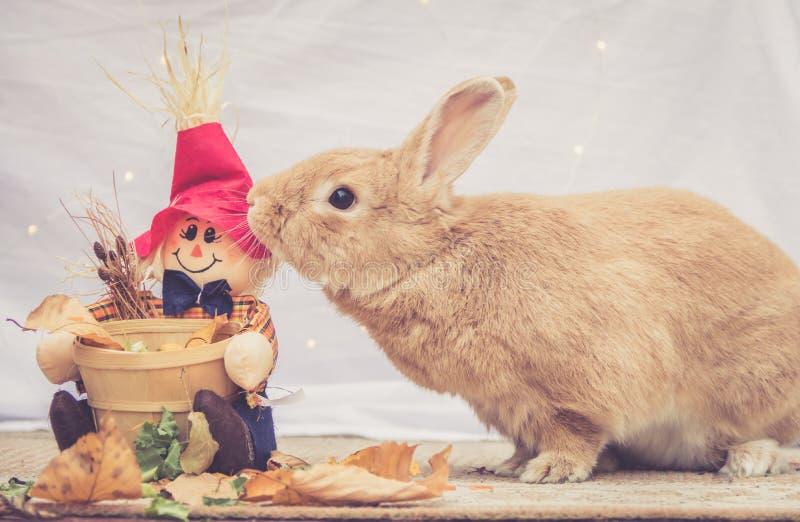 Rufus coloreó la decoración del espantapájaros de la caída de los codazos del conejo fotos de archivo libres de regalías