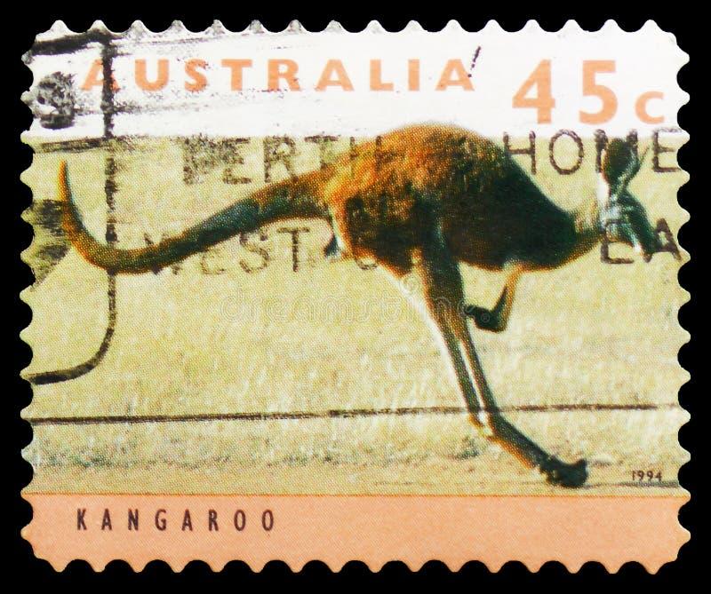 Rufus del Macropus del canguro, serie rojos de KangaROOS y de las koalas, circa 1994 fotografía de archivo