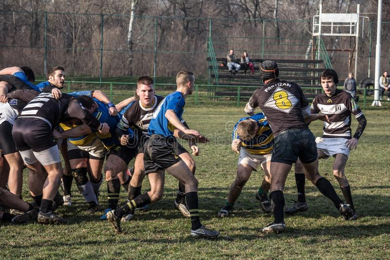 Rugby Scrum during a training of the Partizan Rugby team with white caucasian men confronting and packing in group to get the ball. Picture of white young stock images