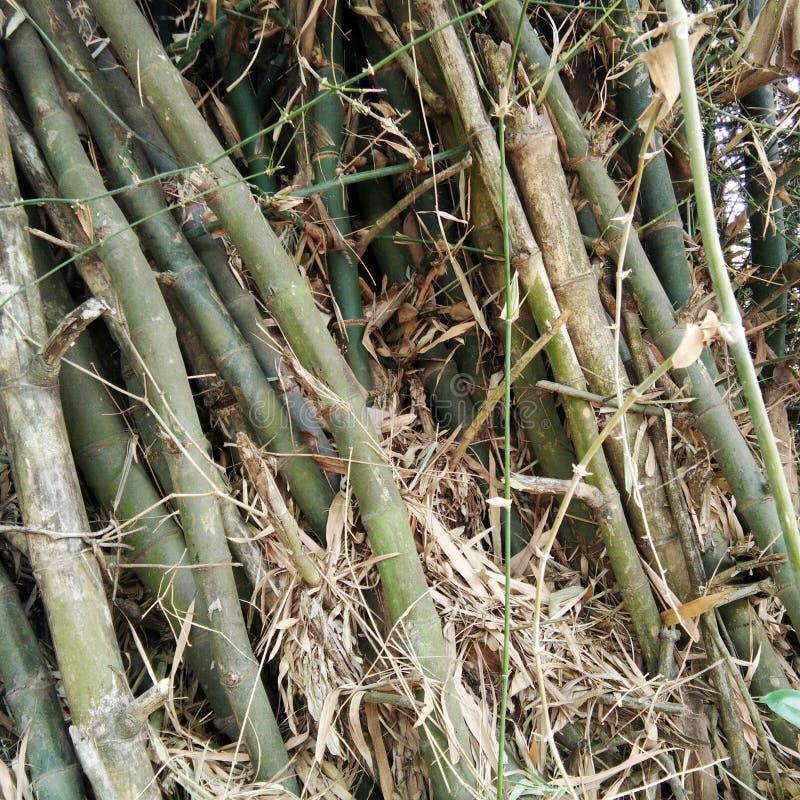 Rugge av bambu arkivfoto