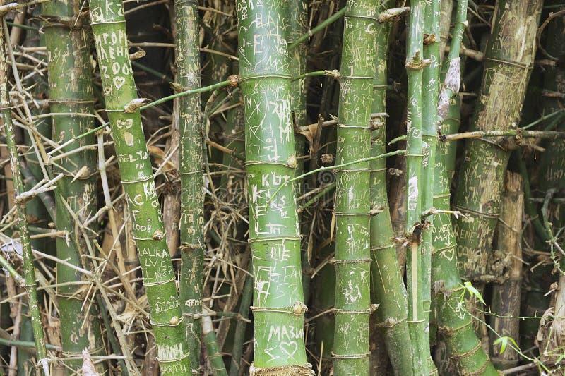 Rugge av bambustammar med namn på skället i Suphan Buri, Thailand arkivbild