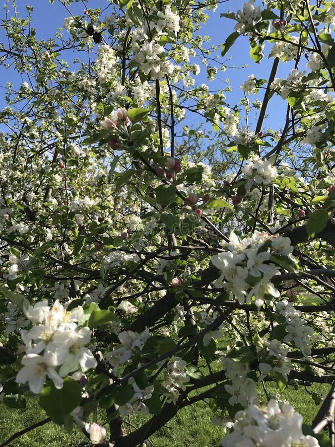 Rugge av blommor royaltyfria foton