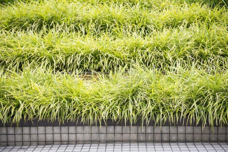 Rugge av gräs i trädgård arkivbilder