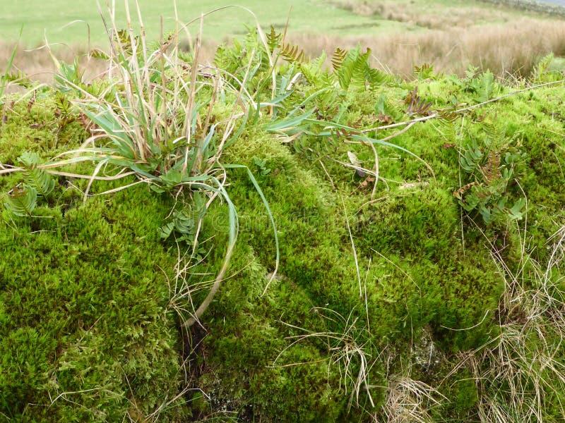 Rugge av mossa och gräs arkivfoton